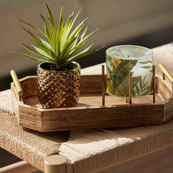 Plante succulente avec pot en ciment