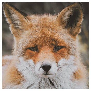 Baby Fox Printed Canvas