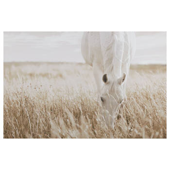 Horse in Field Printed Canvas