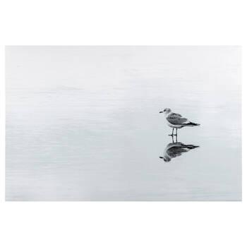 Single Seagull Printed Canvas