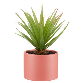 Sword Grass in Pink Ceramic Pot