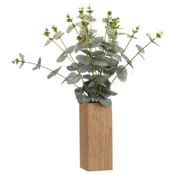 Eucalyptus dans un pot en bois rectangulaire 7 x 35 cm.