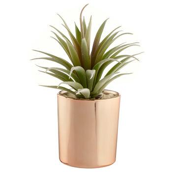 Succulent in Rose Gold Ceramic Pot