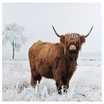 Winter Highland Cow Printed Canvas