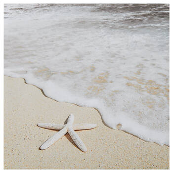 Starfish Printed Canvas