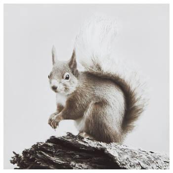 Table imprimé écureuil sur branche