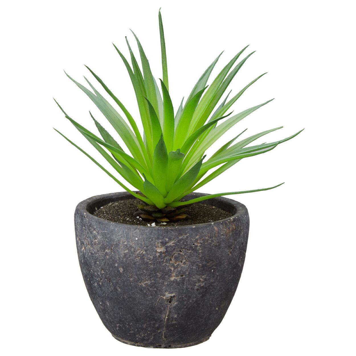 Yucca Dans Salle De Bain ~ plante grasse en pot bouclair com