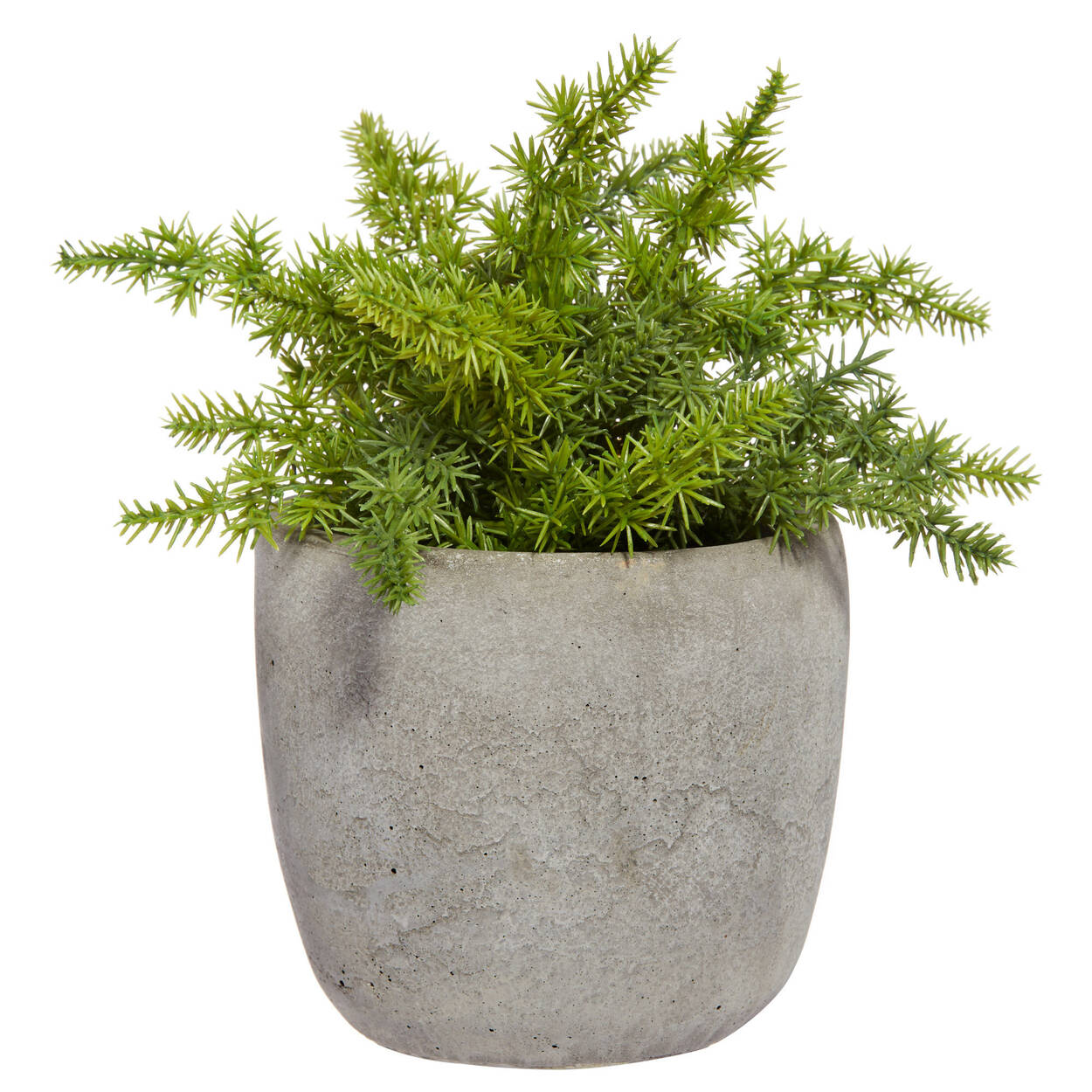 Cement Potted Pine