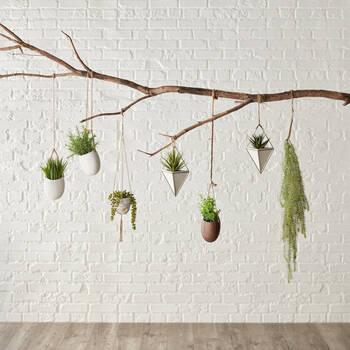 Verdure murale avec pot en céramique
