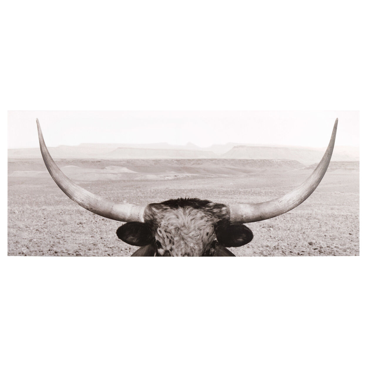 Canvas - Longhorn