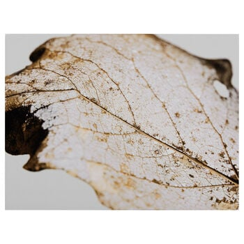 Golden Leaf Printed Canvas