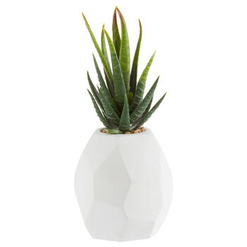 Decorative Potted Succulent