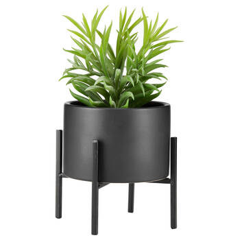 Succulent Plant on Stand