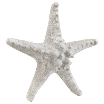 White Sand Starfish