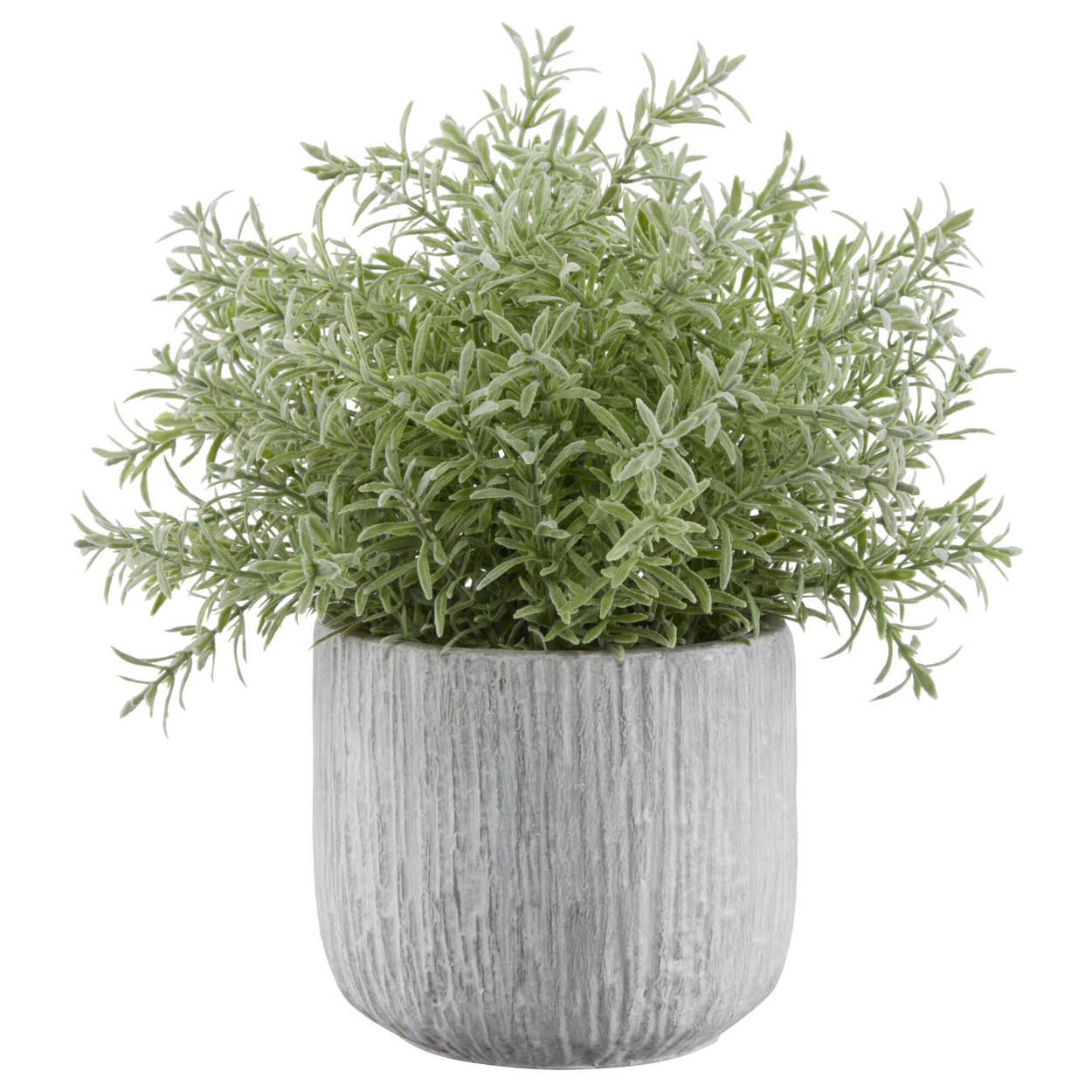 Herb in Cement Bowl