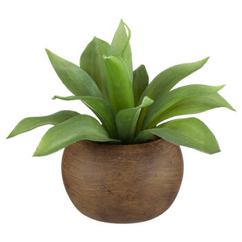 Agave in Mango Wood Pot