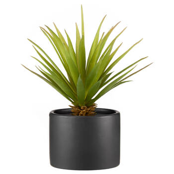 Sword Grass in Ceramic Pot