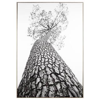 Tall Tree Printed Framed Art