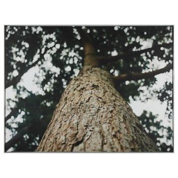 Grand Tree Printed Framed Art