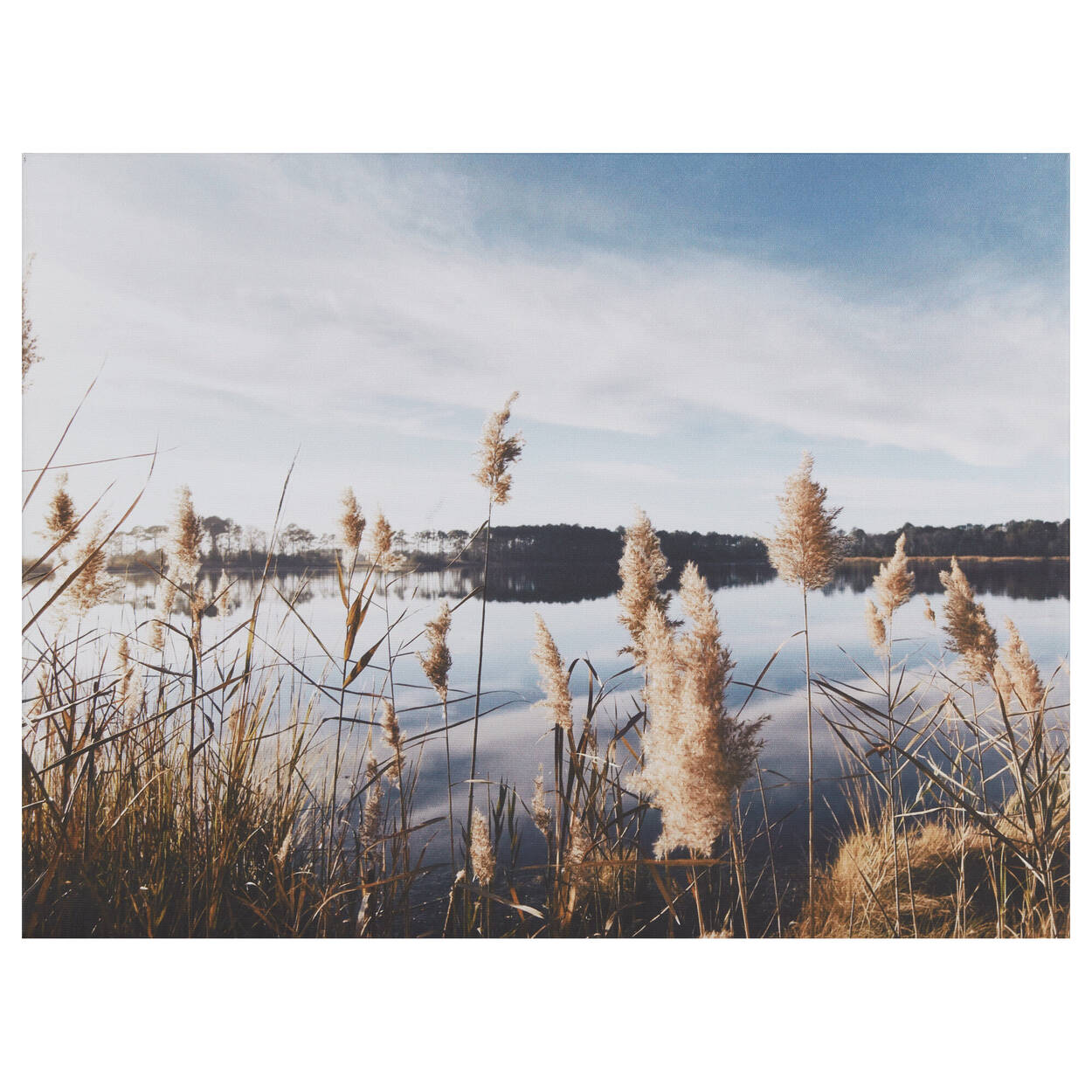 Pampas on Lake Printed Canvas