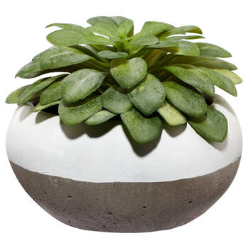 Succulent in Two-Toned Cement Pot