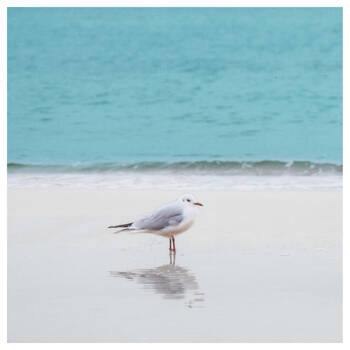 Seagull Printed Canvas