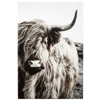 Friendly Highland Bull Printed Canvas
