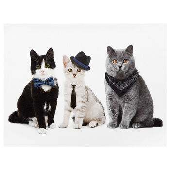 Cool Cats Printed Canvas