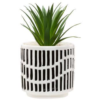 Plante tropical avec pot en céramique à deux tons
