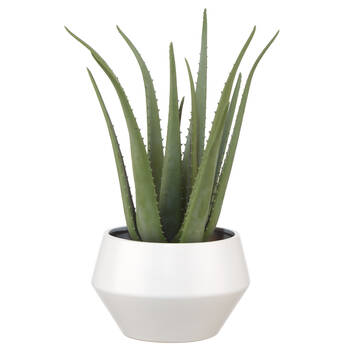Aloe in Ceramic Pot
