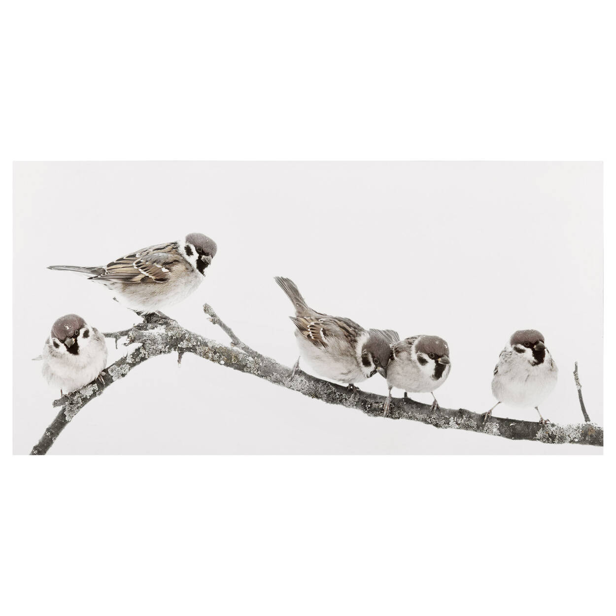 Tableau imprimé de petits oiseaux perchés