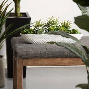 Plantes succulentes dans un plateau en ciment