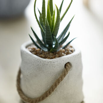 Decorative Potted Cactus