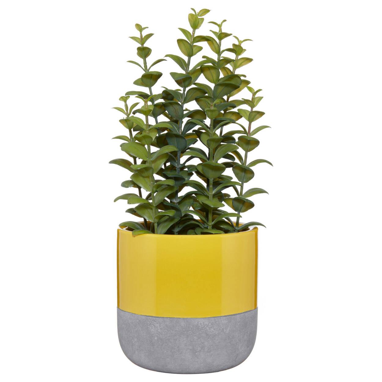 Ficoïde à feuilles en cœur avec pot en céramique