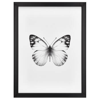 Butterfly Printed Framed Canvas