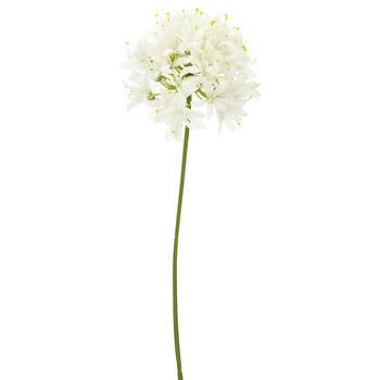Allium sur tige
