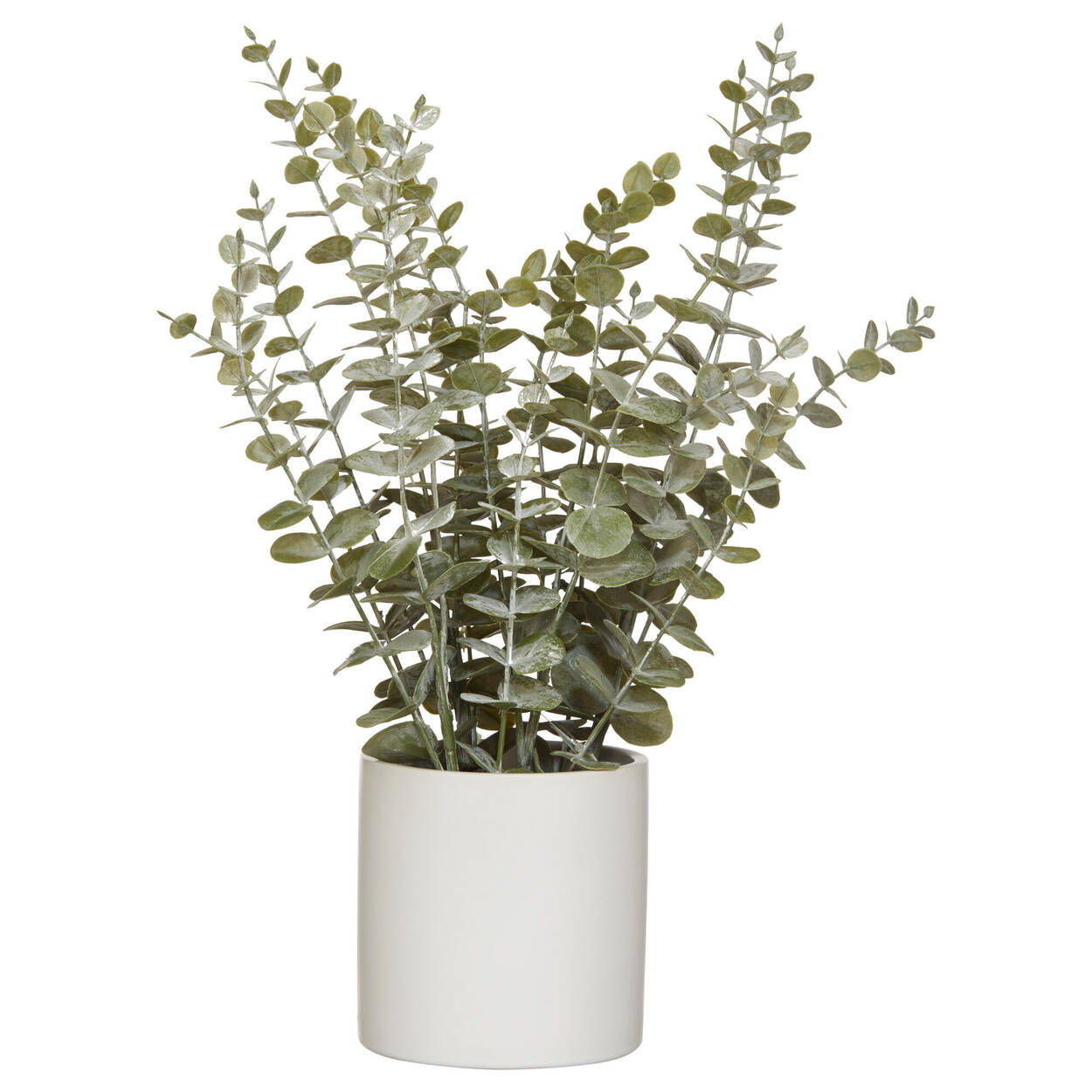 Eucalyptus in Ceramic Pot