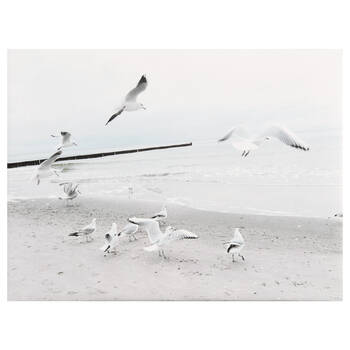 Flock of Seagulls Printed Canvas