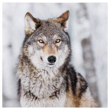 Brown Wolf Printed Canvas