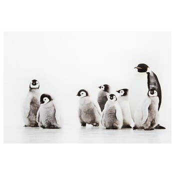 Baby Penguins Printed Canvas