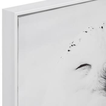 Sleeping Owl Printed Framed Art