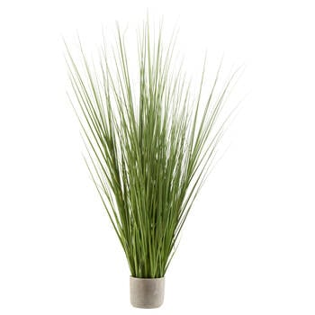 Tall Grass in Cement Pot