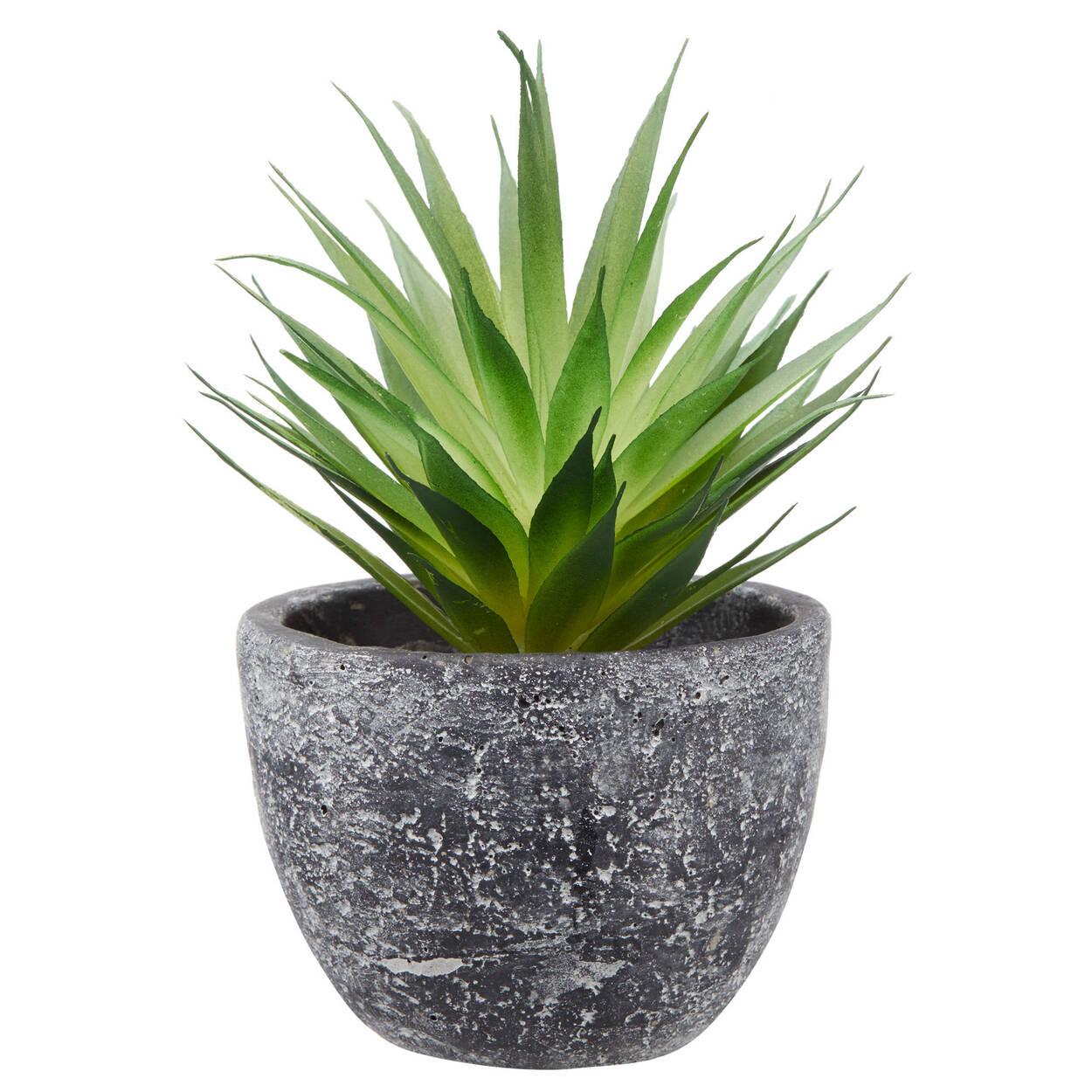 plante grasse en pot en ciment. Black Bedroom Furniture Sets. Home Design Ideas