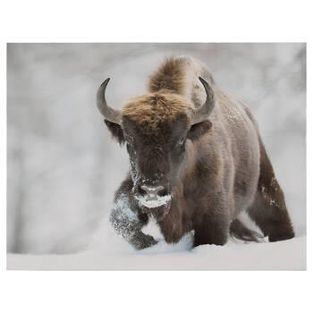 Bison Printed Framed Art