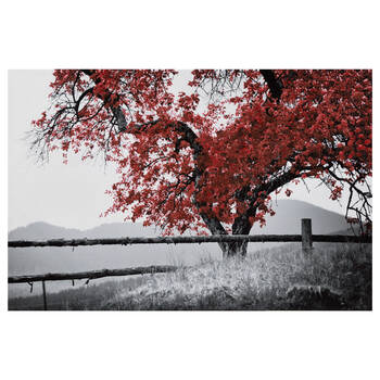 Gel Embellished Blossom Tree Printed Canvas